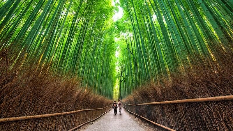 Kyoto Muslim friendly Arashiyama
