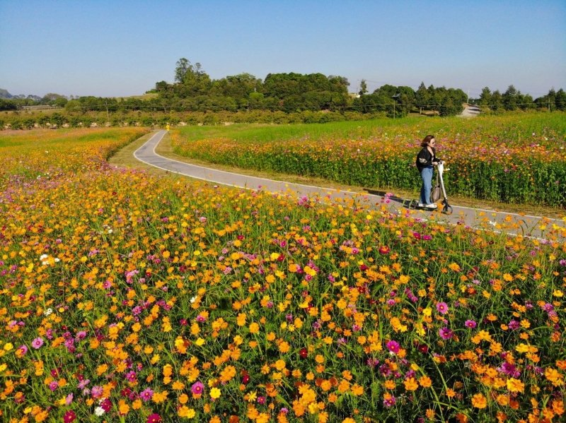 best flower fields thailand singha park
