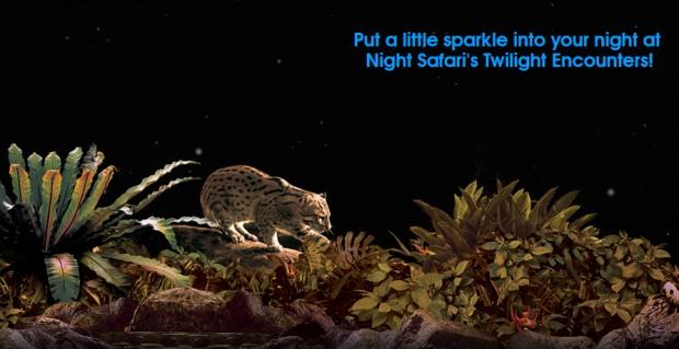 Win an Exclusive Encounter with Elephants in Night Safari