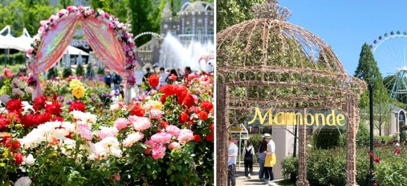 rose garden everland