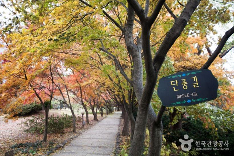 Byeokchoji (BCJ) Botanical Garden, Paju